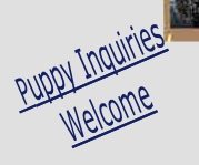 Puppy Inquiries Welcome